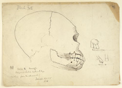 Full-size sketch of a skull from cairn circle grave, Jivarji, Gulbarga district. 5 April 1851